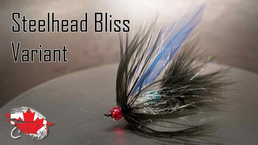 Friday Night Flies - Black & Blue Steelhead Bliss Fly