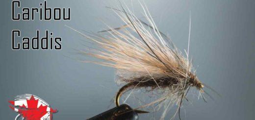 Friday Night Flies - Caribou Caddis