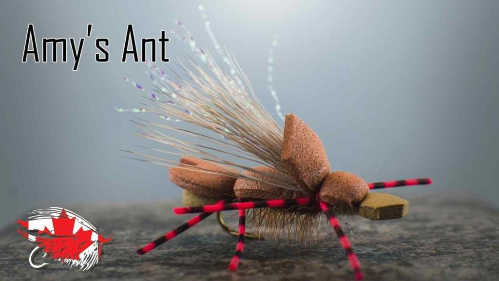 Friday Night Flies - Amy's Ant