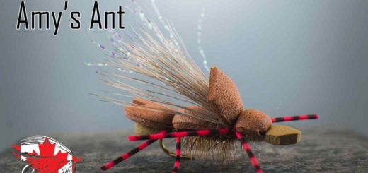 Friday Night Flies - Amy's Ant