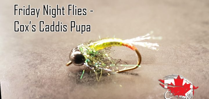 Friday Night Flies - Cox's Caddis Pupa