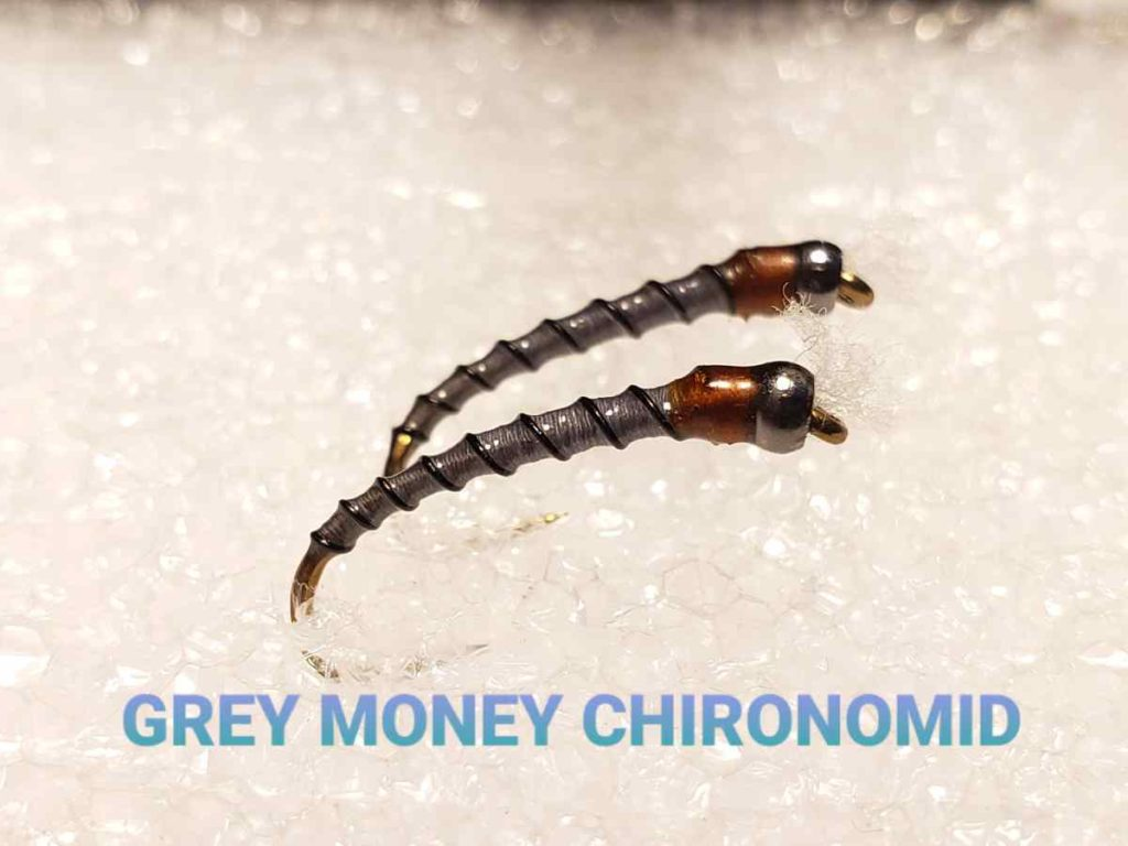 Grey Money Chironomid